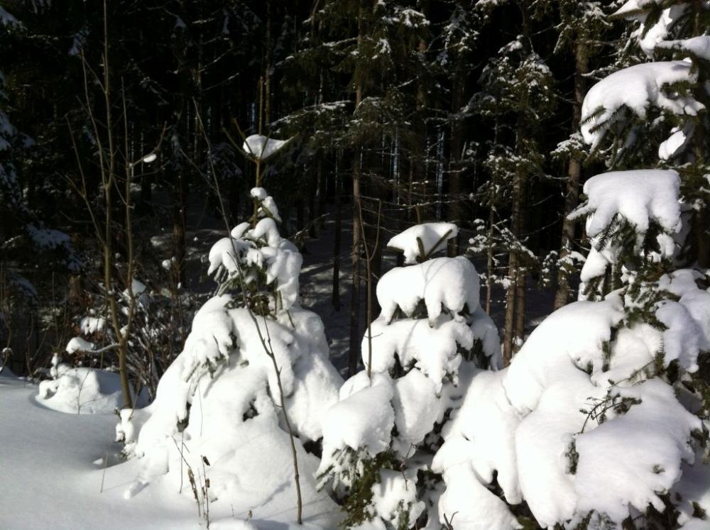 winter-notzen-6